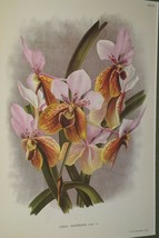 Lindenia Limited Edition Print Vanda Sanderiana Rchb Orchid Collectible ... - $15.19