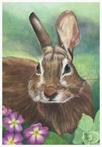 Hare - A4 print of original colour pencil artwork  + matt and mount - $40.00