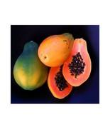 5 Organic Papaya Seeds - $1.98