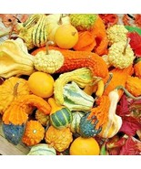 50+SMALL MIXED GOURDS Seeds Hard Shell Type-Crafts Autumn Decoration Bas... - $2.50