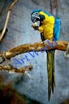 Digital download,Macaw parrot,Photography,Christmas decor,Home decor,Pri... - $4.50