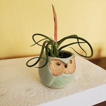 "Owl Planter with Air Plant, 2.5"", sea green ceramic pot, Tillandsia airplant image 3"