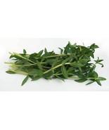 Fresh Rice Paddy Herb- 8 oz. - $15.99