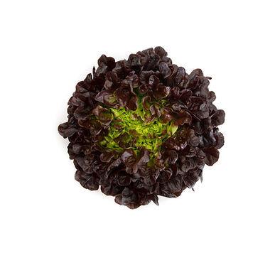 Salanova Red Oakleaf Pelleted Lettuce Seed, Vegetable Seeds,Ship From US - $20.00