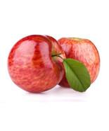 Mixed Sweet Apple Seed 50 Seeds Malus Domestica Organic Bulk Seed S018 - $1.99