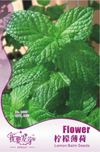 40 seeds / pack, Fresh Lemon Mint Herbs Balm Heirloom Seeds #NF141 - $6.73