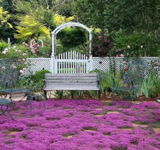 200 seeds/pack Creeping Thyme Herb the seeds of perennial flower garden ... - $2.79