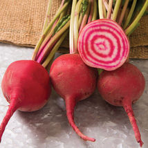 Chioggia Guardsmark Organic Beet Seed ,Vegetable Seeds,  Ship From US - $15.00
