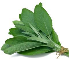 SHIP FROM US 1,500 Broadleaf Sage Herb Seed, ZG09 - $37.56