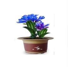 150+Blue color Beautiful Chinese clivia seeds plants bonsai garden flowe... - $12.19