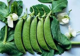 SHIP From US, 25 Seeds Taichung 13 Pea Seeds, DIY Healthy Vegetable AM - $21.99
