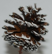 Wholesale lot 15 Pine Cones Snow Like White Tipped Plastic End Pics image 2