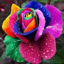 100 Seeds Rare Holland Rainbow Rose Flower Lover Multi-color Plants Home - $4.21