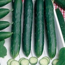 SHIP From US, 10 Seeds Early Spring Burpless Cucumber, DIY Healthy Veget... - $18.99