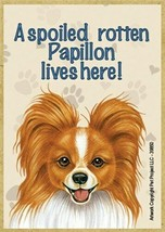 A spoiled rotten Papillon lives here! Red Wht Fridge Dog Magnet 2.5X3.5 ... - $4.99