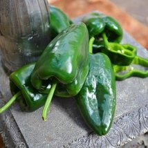 100 Seeds of Caballero Pepper - $35.34