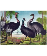 4477.Three ostriches together in jungle.roaming.POSTER.decor Home Office... - $10.89+