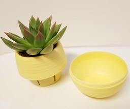 """Miranda Succulent in Yellow Self-Watering Pot - Live Plant Echeveria 3"""" Planter image 2"""