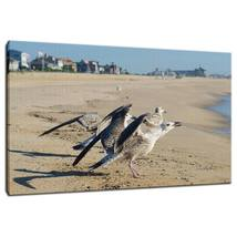 An item in the Art category: Wildlife Photograph Screaming Gull Fine Art Canvas - Home Decor Wall Art Prints