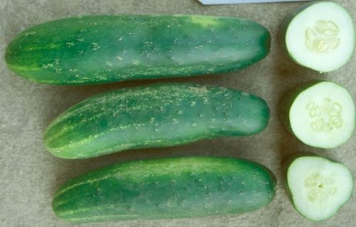 SHIPPED From US,PREMIUM SEED: 50 Particles of Cucumber, Fresh Hand-Packaged