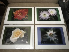 Set of 4 James Williams Individually Packaged Flower Themed Photo Note C... - $14.95