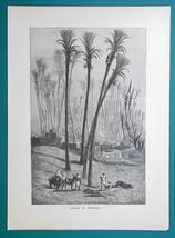 ALGERIA Africa Oasis of Metlili - 1877 Wood Engraving Illustration - $8.09