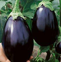 Black Beauty Dark Purple Eggplant Aubergine Garden Vegetable 1/2 gram Seeds - $6.99