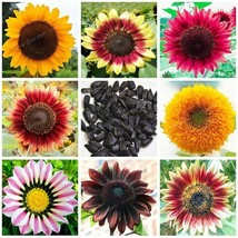 Super 20 Seeds 7 Kinds Sunflower Ornamental Potted Plants Helianthus Annuus - $2.10