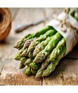 Mary Washington 5 Live asparagus bare root plants -2yr-crowns - $9.89