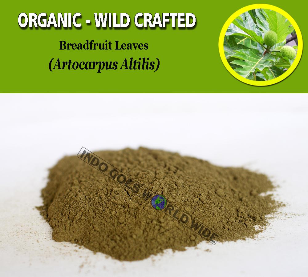 POWDER Breadfruit Leaves Artocarpus Altilis Organic Wild Crafted Natural Herbs