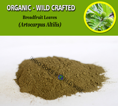 POWDER Breadfruit Leaves Artocarpus Altilis Organic Wild Crafted Natural Herbs - $7.85+