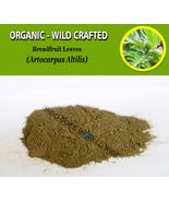 POWDER Breadfruit Leaves Artocarpus Altilis Organic Wild Crafted Natural... - $16.40+