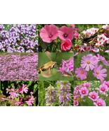 SHIP FROM US 70,000 Pink Power Wildflower Mix Seeds, ZG09 - $73.16