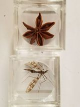 Artifact Insect Entomology Beetle Collection 23 Specimen Dried Real Taxidermy image 7