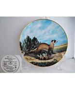 The Black Footed Ferret Endangered Species Porcelain Collector Plate - $19.89