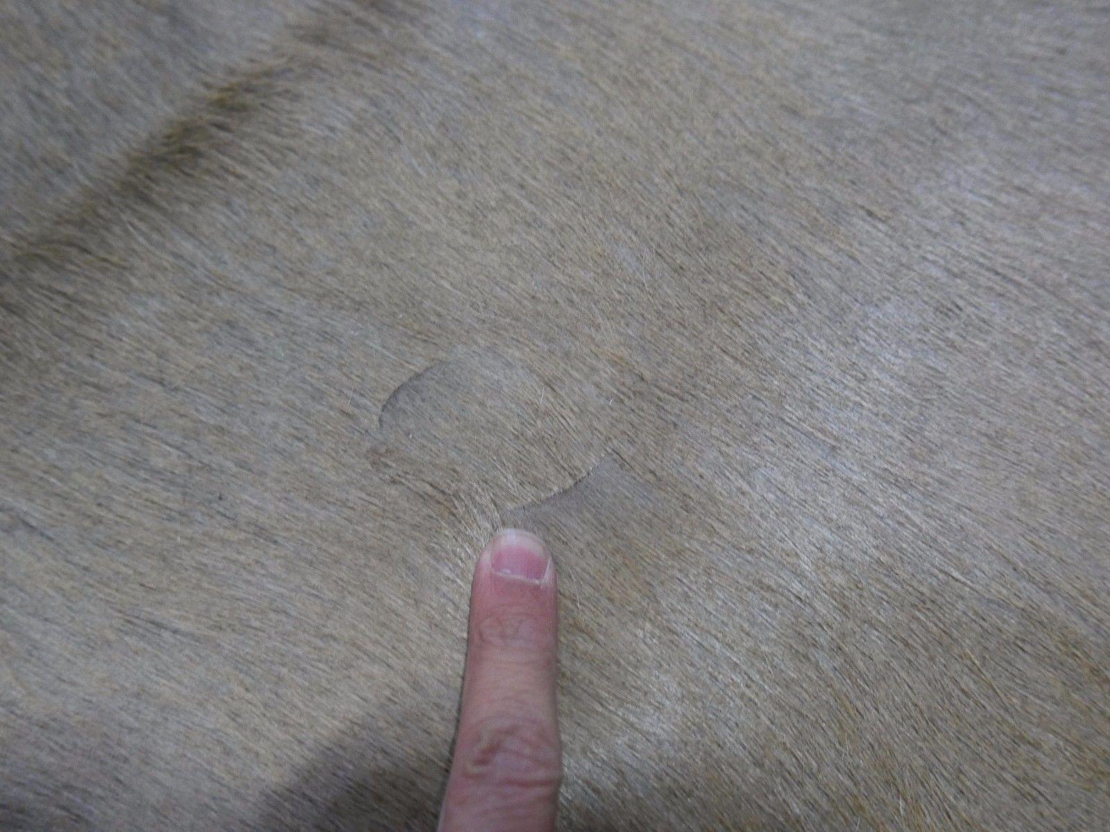 African Kudu Skin Antelope buck skin similar to cowhide rug Kudu Antelope Hide