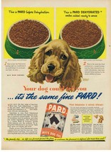 1943 COCKER SPANIEL Morgan Dennis Pard Swift's dog food Print Ad - $9.99