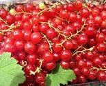 61jmvs2fmll. sl1500  thumb155 crop