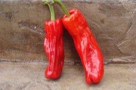 10+ Seeds Of Cristal Pepper - $21.76