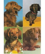 Vintage Dachshund Postcards Lot of 12 Longhair Smooth Wirehair Doxies - $11.87