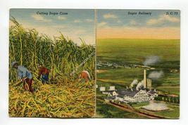 Cutting Sugar Cane - Sugar Refinery Clewiston Florida - $1.99