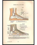 Foot Outer View Anatomy Print Anatomical Diagrams 1924 - $10.99