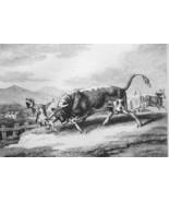 AESOP FABLES Animals Bull & Vicious Mastiff - 1811 Original Etching Print - $25.20