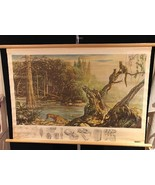 """Antique Denoyer Geppert Co. Wildlife Biology Biocraft Chart 28""""X43"""" Wood... - $195.00"""