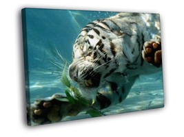 White Tiger Underwater Wild Cat Animal Decor Framed Canvas Print - $14.96+