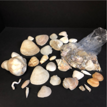BULK LOT Mixed Seashells 2 Pound 14 oz Crafters Display Decor Large Medi... - $26.99