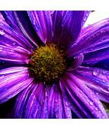 3D Fresh Dewy Purple Flower 39 Wall Paper Wall Print Decal Wall AJ Wall ... - $32.15+