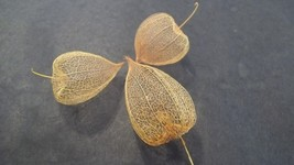 Three Dried Chinese Lantern Seed Pod Skeletons for Crafts and Arrangements - $16.95