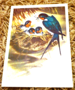 Swallow Bird Martin Nestling Illustration Print Vintage Soviet Postcard ... - $3.50