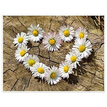 Heart Of Daisies Photography Wall Art Poster - $15.35